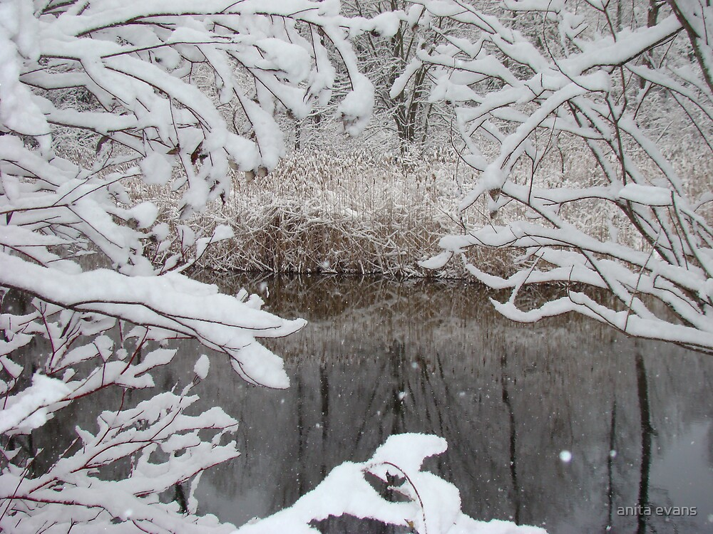 winter framed pond by anita evans
