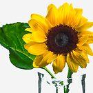 Sunflower  by katarina86