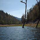 A dead tree by merkinmerchant