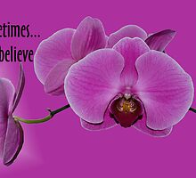 Just Believe! by Maria Dryfhout