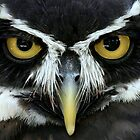 Owl Eyes by Gregg Williams