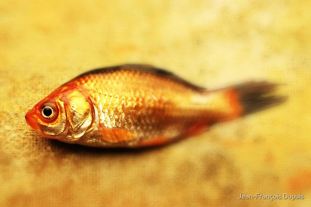 Fish by Jean-François Dupuis