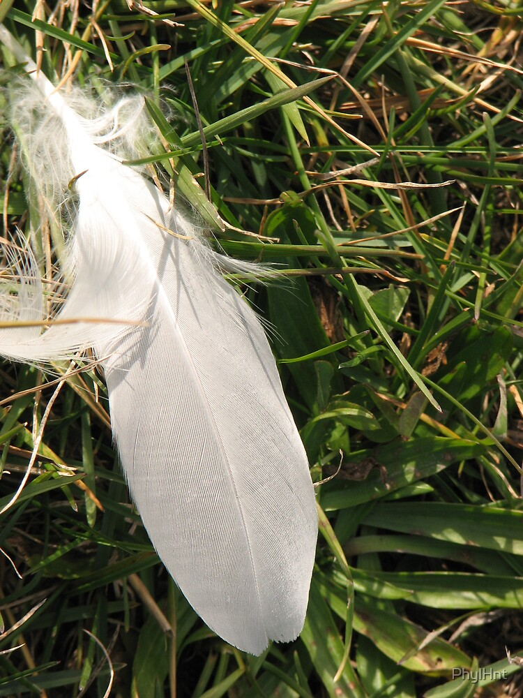 Seagull Feather by PhylHnt