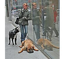 Another Doggone Phone Call Photographic Print