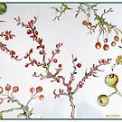 DIFFERENT WINTER BERRIES by Gea Austen