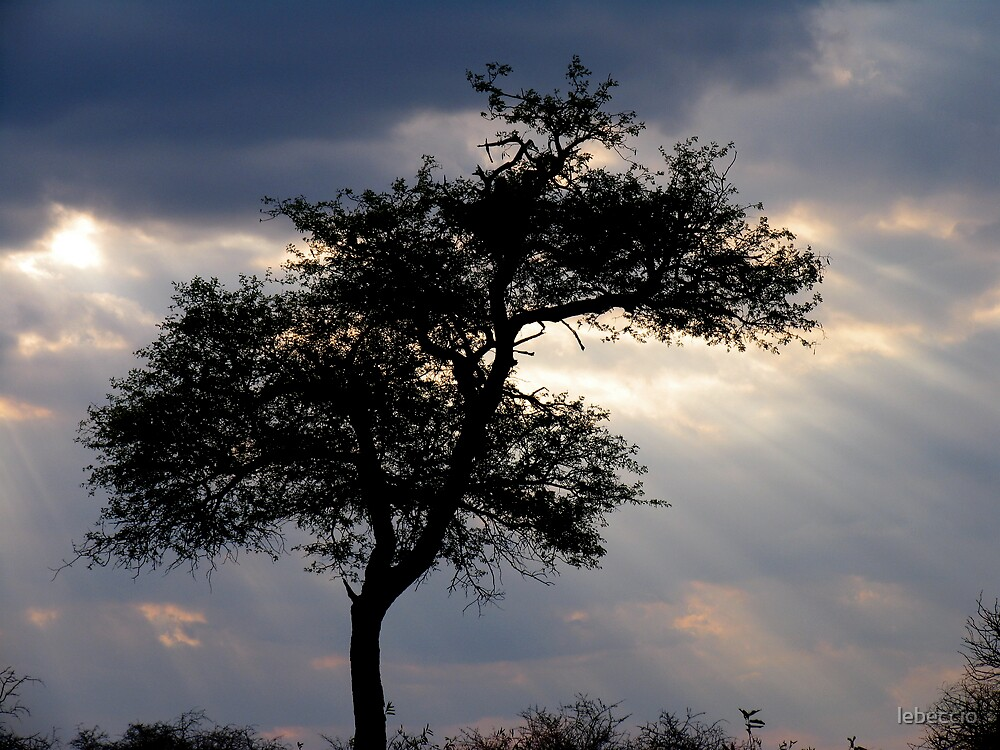 Sunrays in Africa by lebeccio