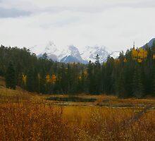 Colorado In The Fall by Stephanie  Triplett