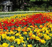 Tulips in the park by Mike Warman