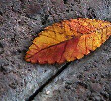Leaf by Janaigee