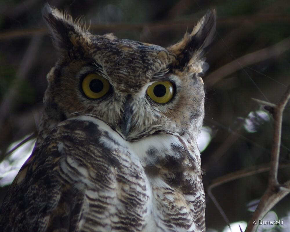 Owl by K Donatelli