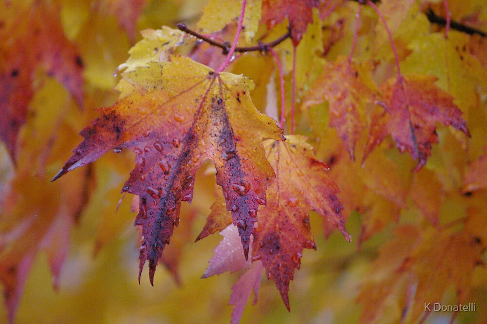 Fall Colors by K Donatelli