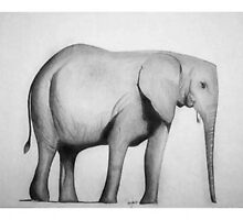 Olifant by Carrie Jackson