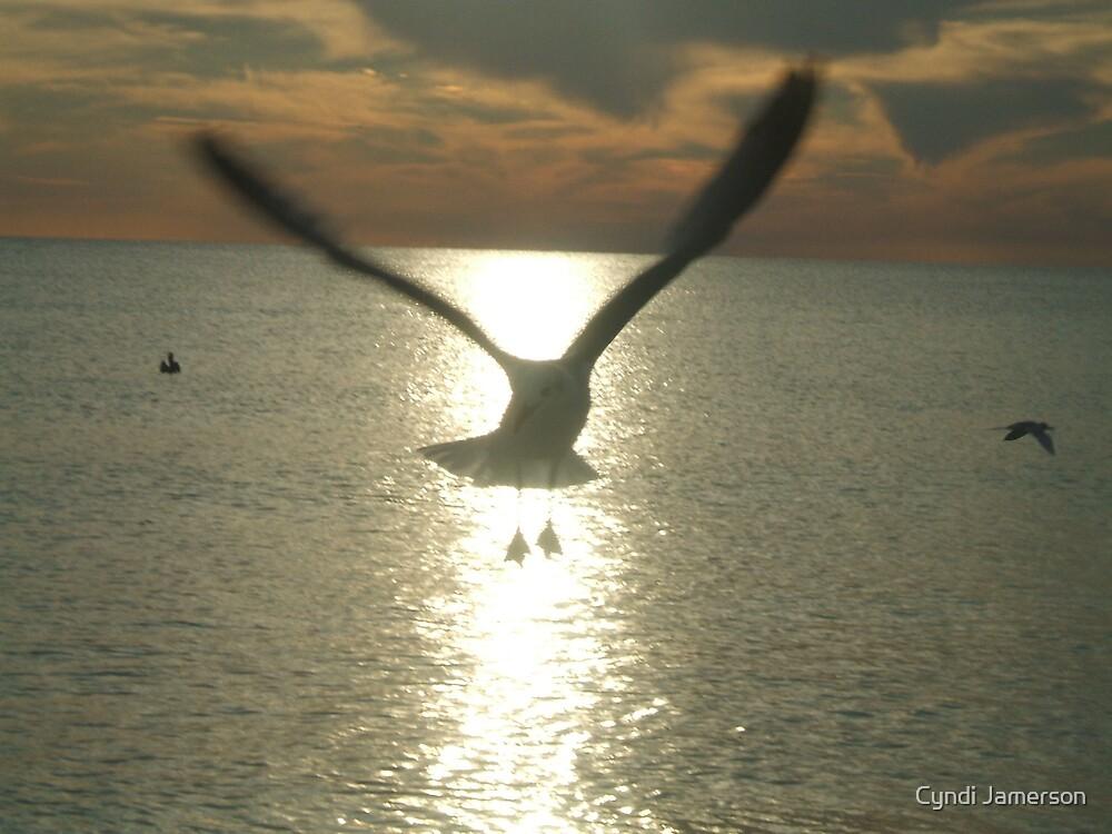 seagull at sunset by Cyndi Jamerson