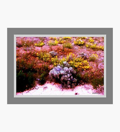 Desert Wildflowers and Sagebrush Photographic Print