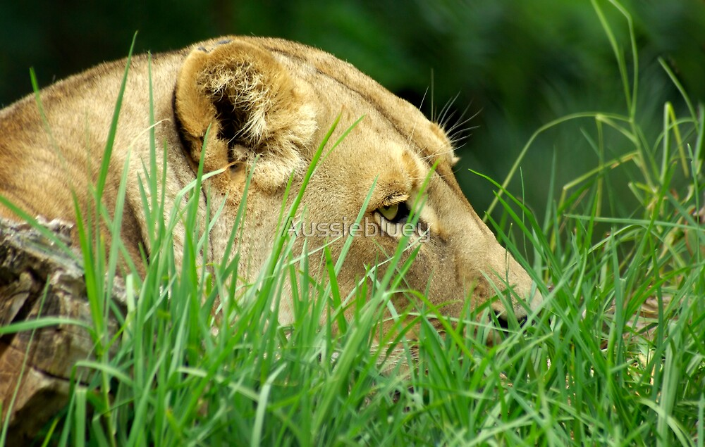 Hiding in the grass. by Aussiebluey