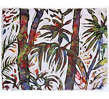 The Indian Jungles Photographic Print