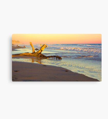 Drift Wood, Goleta, California Canvas Print