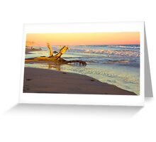 Drift Wood, Goleta, California Greeting Card