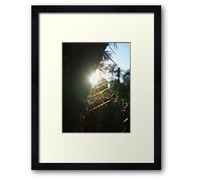 Sunset cactus Framed Print