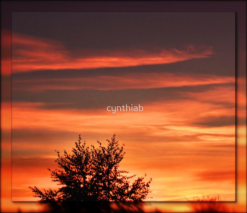 orange sunset by cynthiab
