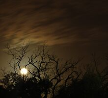 Moonlight by Michael Naylor