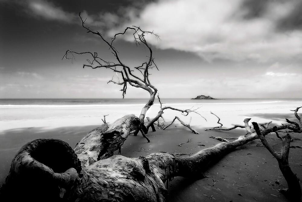 RIP in Cape Tribulation by Robert Mullner