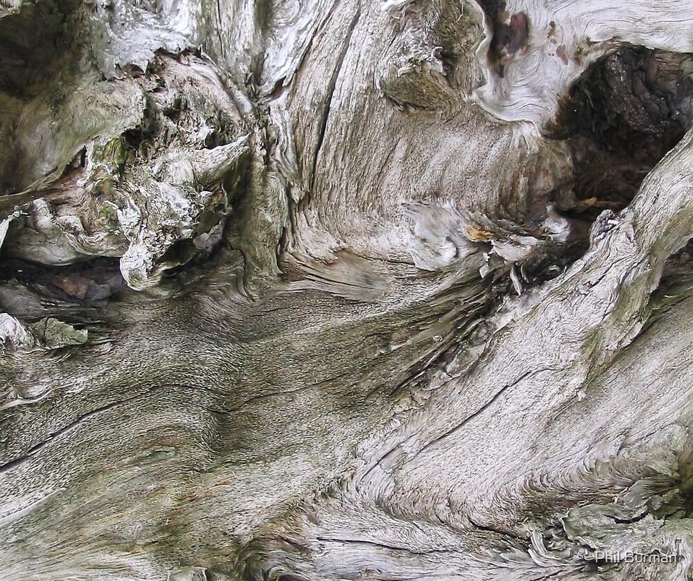 Dead tree by Phil Burman