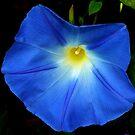 Blue Morning by Jamie Lee