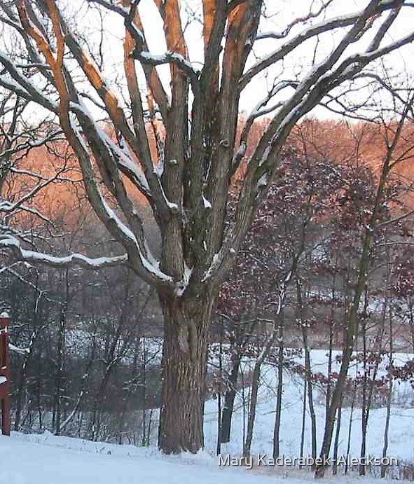 Sunset on the Old Oak Tree by Mary Kaderabek-Aleckson