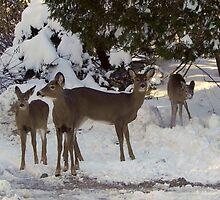 Winter Excursion by Martha Medford