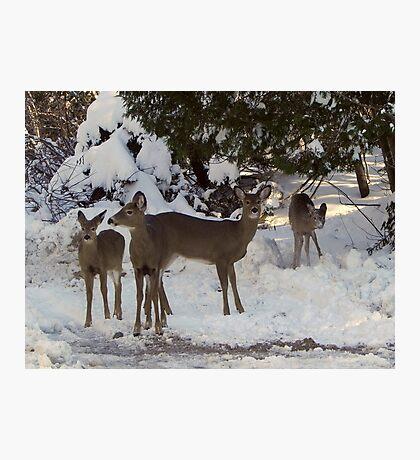 Winter Excursion Photographic Print