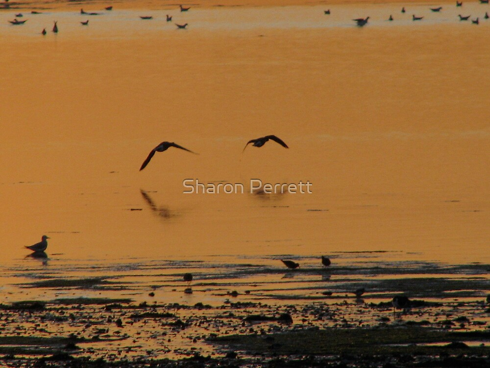 Time to go by Sharon Perrett