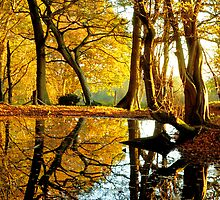 Golden Reflection by Christian Galbally