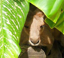 Peek-a-Boo Kangaroo by Wayne Holman