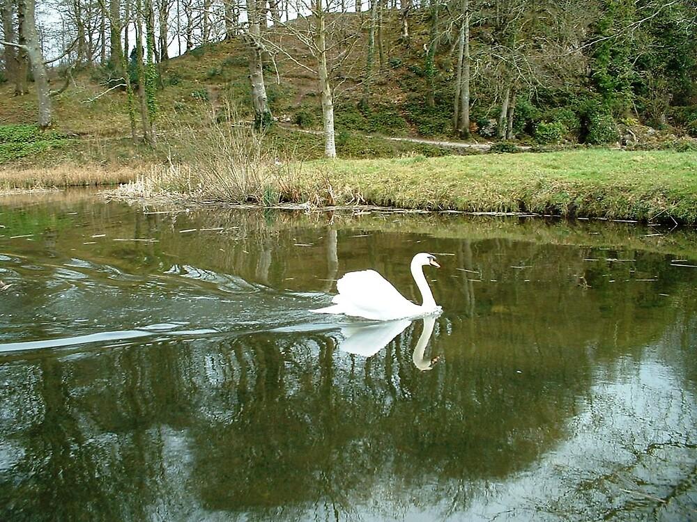 The Lone Swan by Patrick Ronan