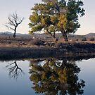 Reflections study 1 by David  Postgate