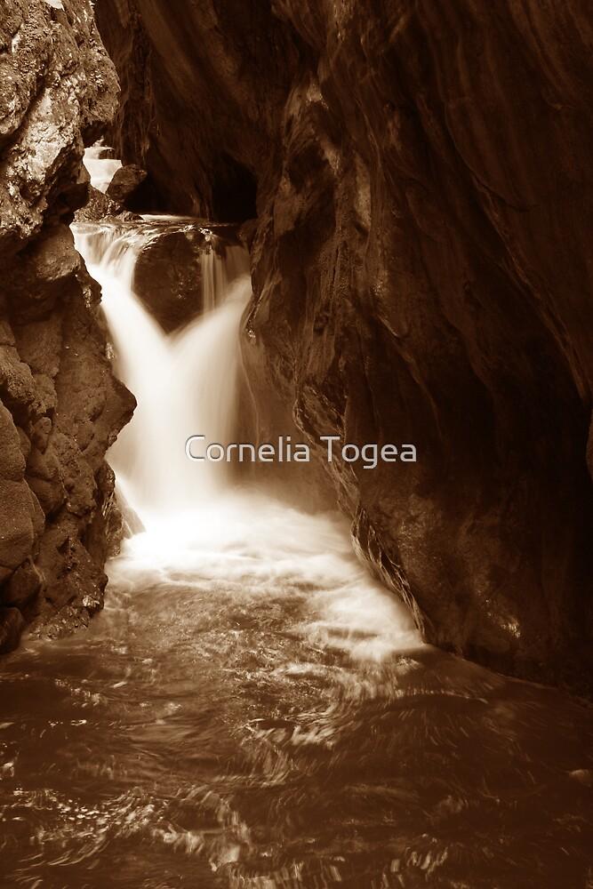 soft fall by Cornelia Togea