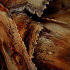 Aloe Leaves by Deon de Lange
