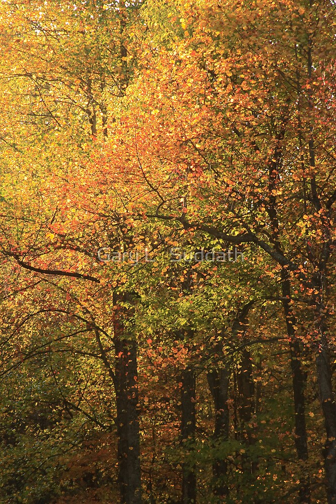 Autumn by Gary L   Suddath