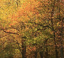 Autumn by Gary L   Suddath