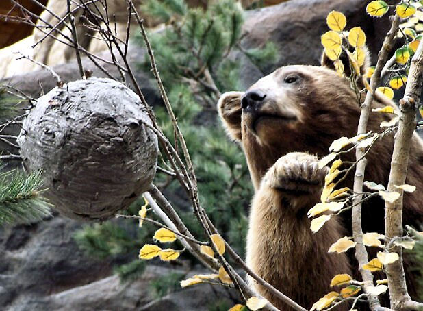 Bearly Within Reach by susannahg