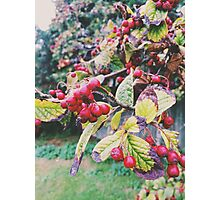 Berries in Autumn Photographic Print