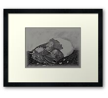 Birth of a dragon Framed Print