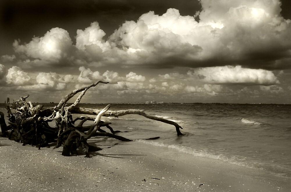 Driftwood by Martyn Starkey