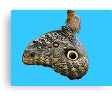Mindo Butterfly Canvas Print