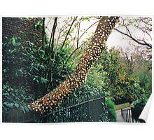 Bubblegum tree Poster
