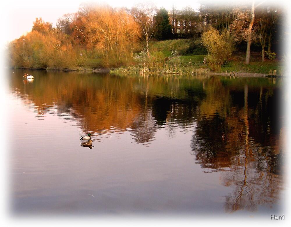 River Walk by Harri