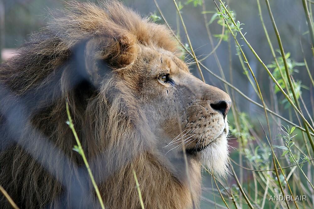 LION by ANDIBLAIR