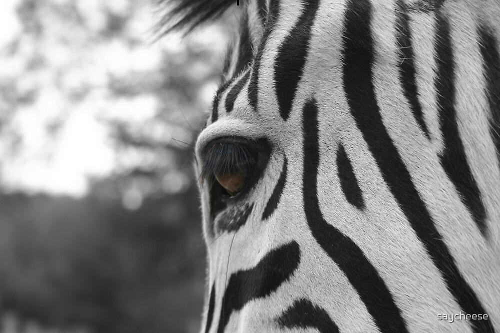 Zebra Eye by saycheese