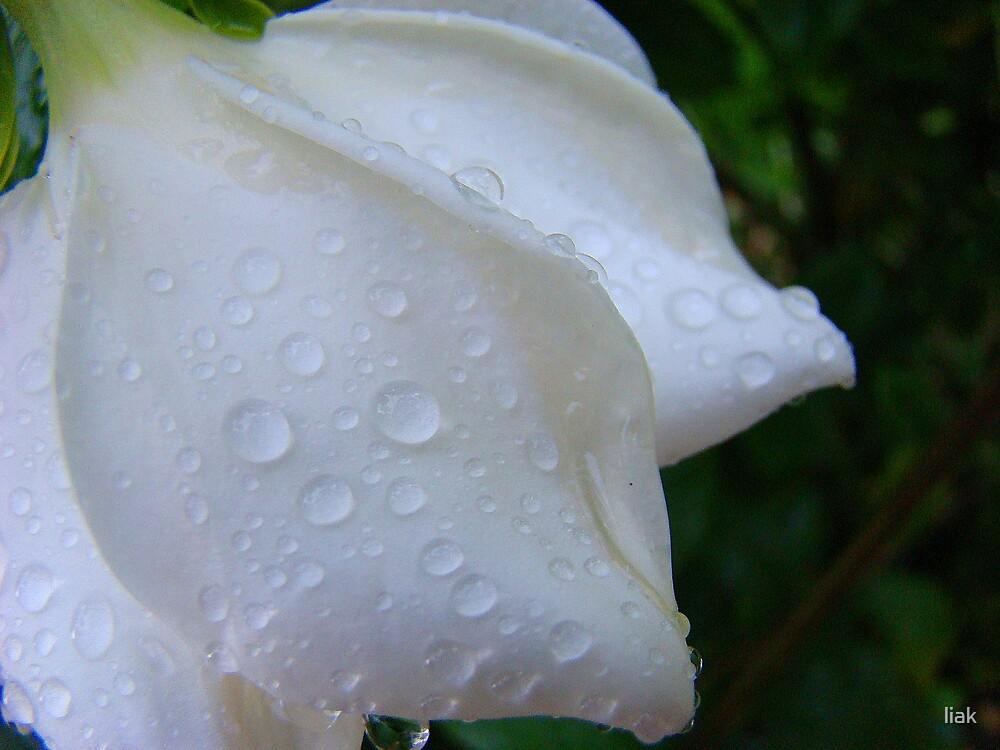 white & wet by liak